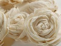 Sola Flowers