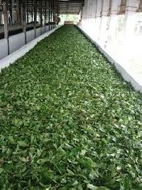 Green Leaves Tea