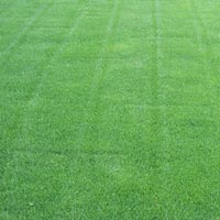 Grass Plantation Service