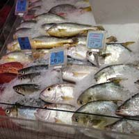 Fish Cold Storage