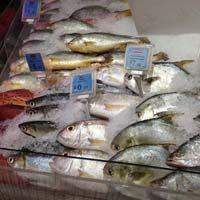 Fish Cold Storage