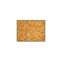 Yellow Corn Waste Meal