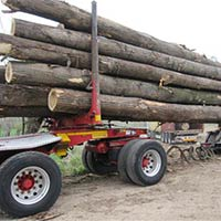 Wood Logs - Exporters and Wholesale Suppliers,  Tamil Nadu - Sri Vishnu Timber