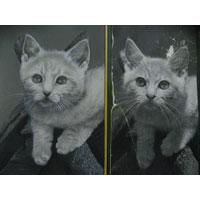 Pet Portrait Miniature Style