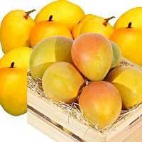 Alphonso Mangoes-01