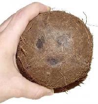 Coconut-01