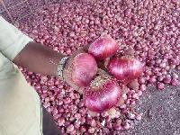 Nasik Fresh Red Onion