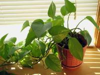 Indoor Foliage Plants