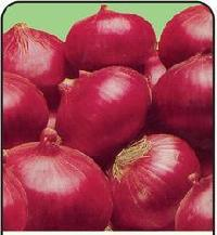 Nasik Red Onion