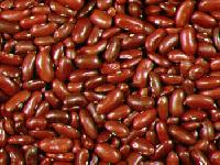 French Beans Seeds