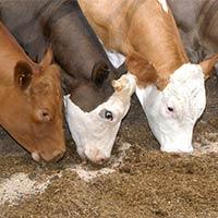 Animal Feed Product