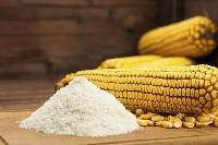Maize Starch Powder / Corn Starch Powder