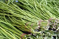 Asparagus bean