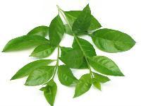 Henna Leaf