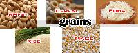 Agriculture Food Grains