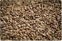 Plantation Coffee Beans