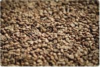 Plantation Coffee Beans