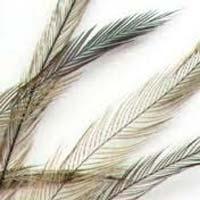 Emu Bird Feather