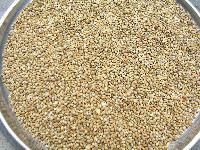 Bajra Seeds