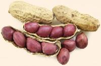 Groundnuts Seeds