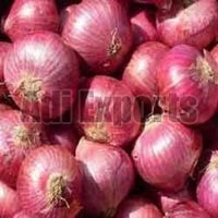 Fresh Red Onion - Manufacturer, Exporters and Wholesale Suppliers,  Maharashtra - Adi Exports