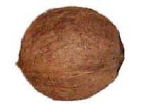 Coconut - 02
