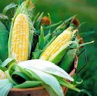 Corn - 03