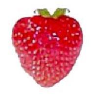 Strawberry - 02