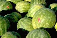 Watermelon - 02