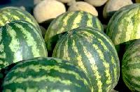Watermelon - 03