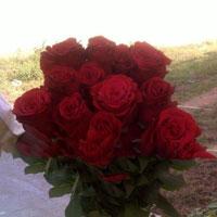 FRESH CUT FLOWERS ROSE