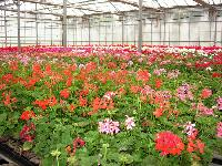 Floriculture Plants