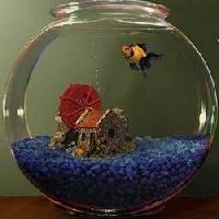 Glass Bowl Aquariums