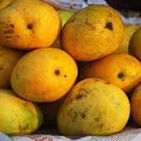 Fresh Balamani Mango