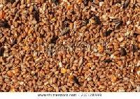 Feed Seeds