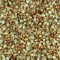 Coriander Split Seed
