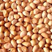 Java 90-100 Groundnut Kernels