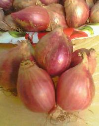 Indian Small Onion