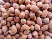Indian Groundnut