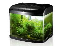 Imported Aquarium Fishes Tank