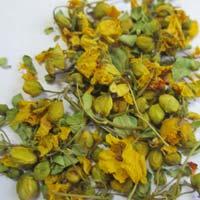 Cassia Auriculata Flowers