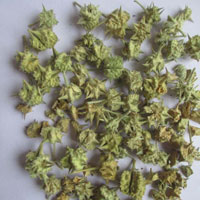 Dried Tribulus Terrestris
