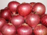Baswant 780 Onion Seeds