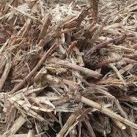 Thailand Bagasse,Bagasse from Thai Manufacturers and Suppliers