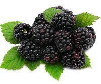 Mannix International Blackberry