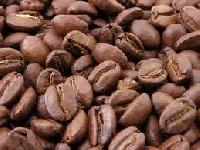 Robusta A Coffee Bean