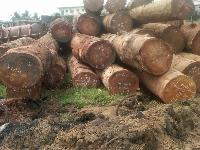 Rosewood Manufacturers Suppliers Amp Exporters In India