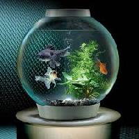 Small Fish Aquarium Tank