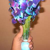 Fresh Orchid Cut Flower