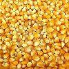 Dried Corn Kernel